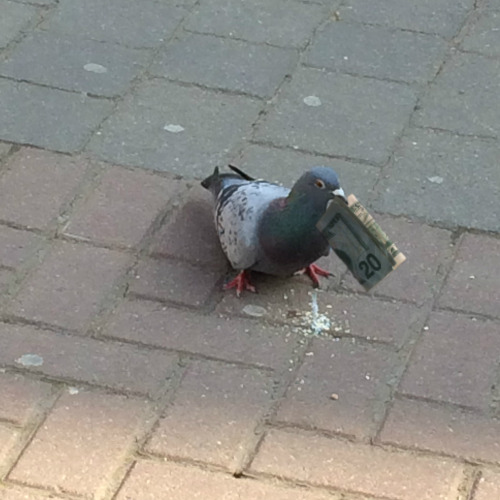 Upvote the money pigeon for a financially stable future