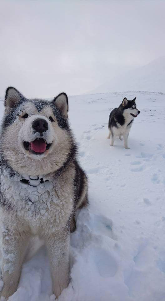 Phil And Niko In The Snow Trending On Imgur This is the official azclip channel for phil, niko and milo. phil and niko in the snow trending on