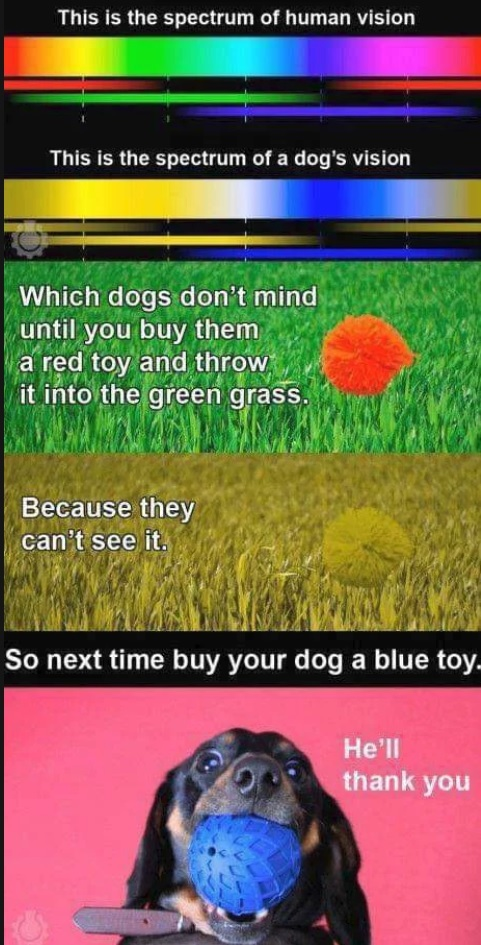 Next time you are at the pet store