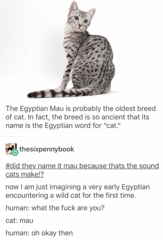 How Egyptian cats got their name
