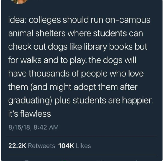 they'd be the happiest dogs on the planet