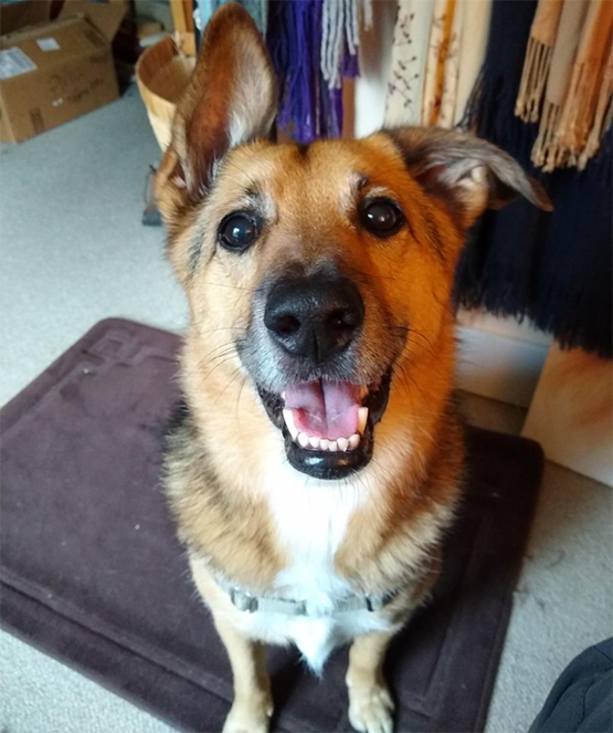 Goodest boy Thor Michaelson needs your help!