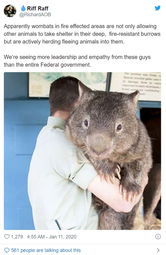 tfw wombats >>> your prime ministers