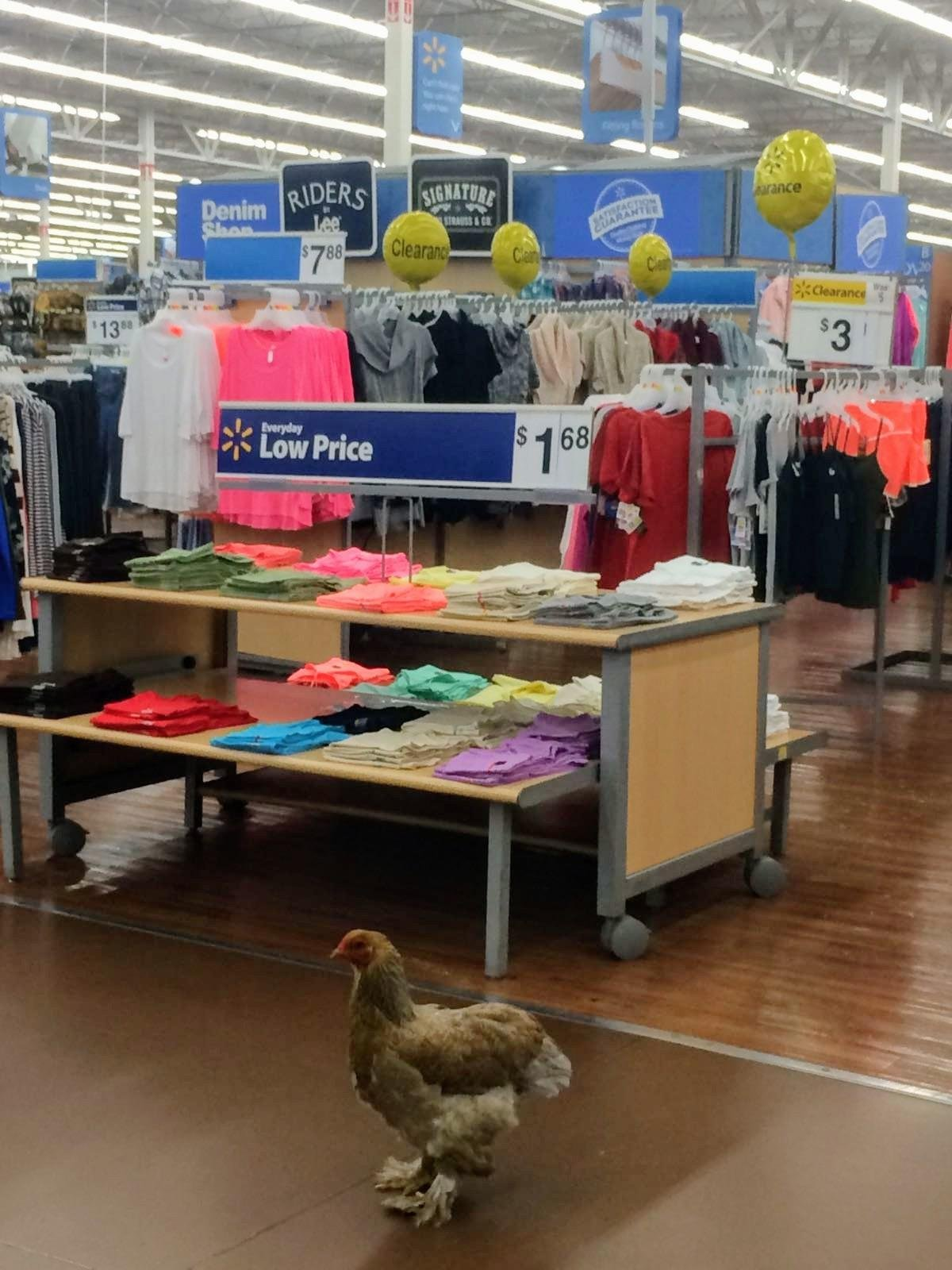 Just chicken out some shirts in Walmart....