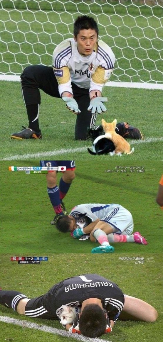 Soccer balls replaced with cats - Trending on Reddit Soccer 24