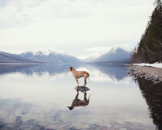A dog on a rock on a lake - Trending on Reddit