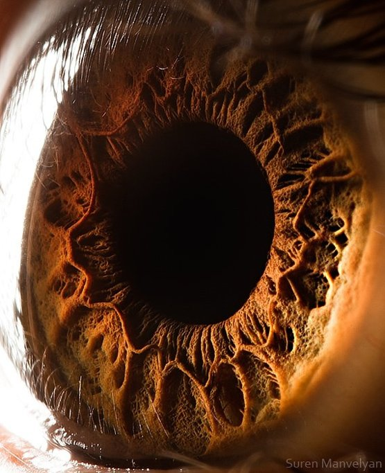Your iris is the sphincter to your soul