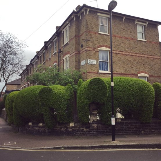 Elephant hedges in London