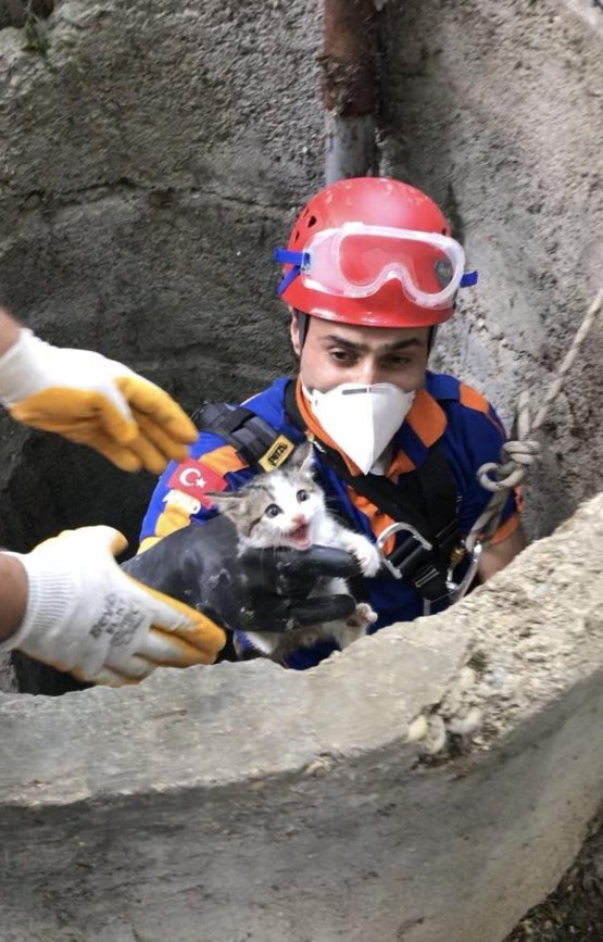 A kitten being rescued from an 15 meters deep well