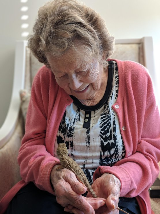 Today my grandma met my pet bearded dragon. Safe to say they hit it off.