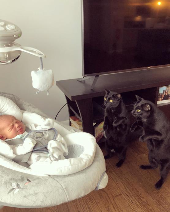 My twin cats meeting their new baby brother! ??????