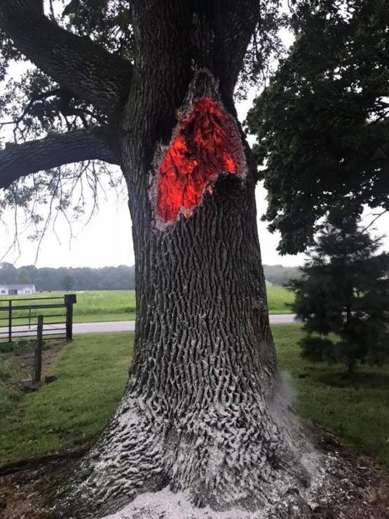 This tree was struck by lightning