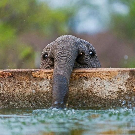 Baby Elephant Blowing Bubbles