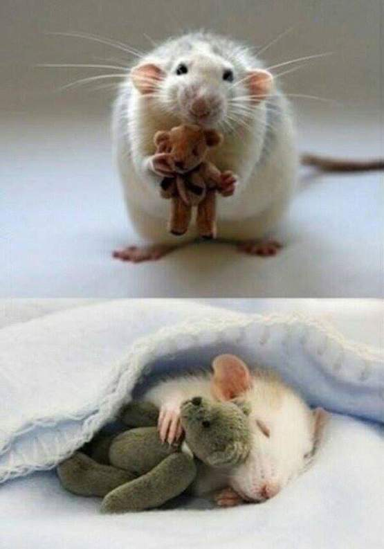 A picture from a lady who makes teddy bears for her pet mouse.