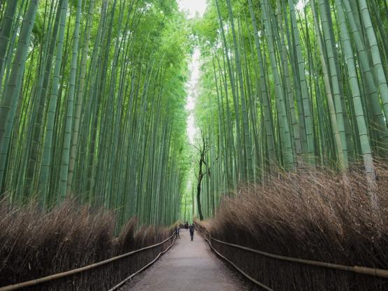My dream came true, went to Kyoto, Arashiyama. I'm not the best but this is my try