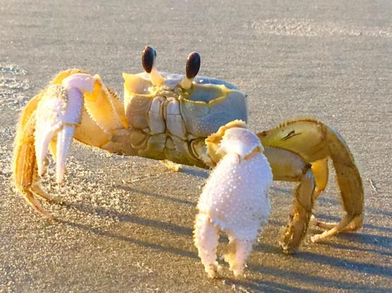 Took a photo of this yellow crab while at the beach a few months back...