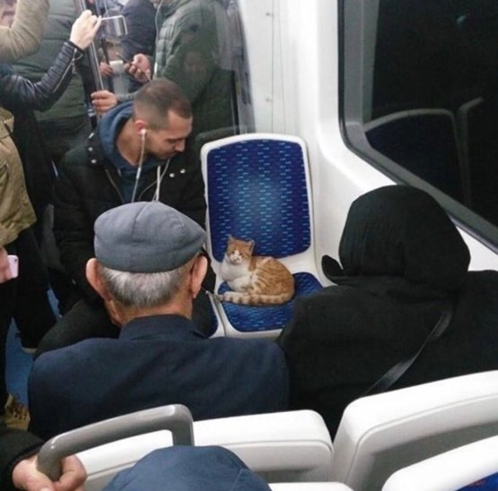 An ordinary bus in Istanbul.