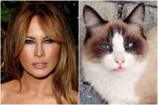 My sister says that our cat looks like Melania Trump