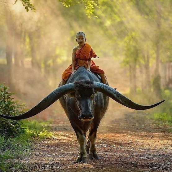 Young boy riding a longhorn buffalo