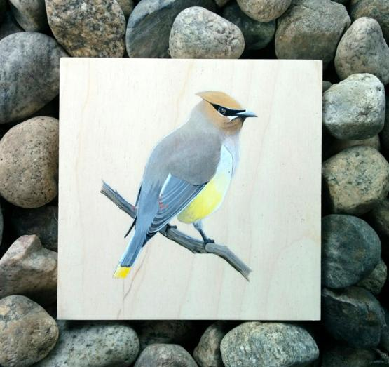 A little cedar waxwing I painted today.