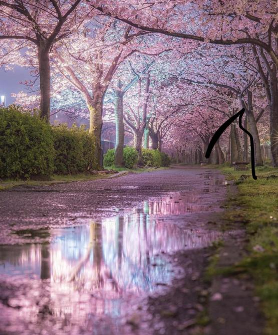Pink blossom reflections