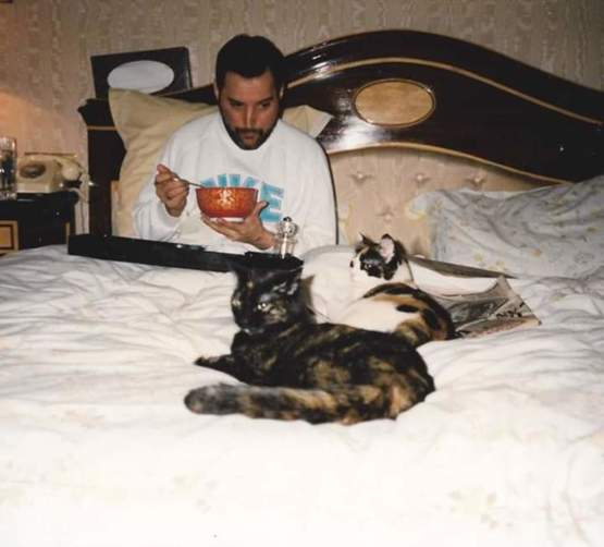 Freddie Mercury eating cereal in bed with his cats.