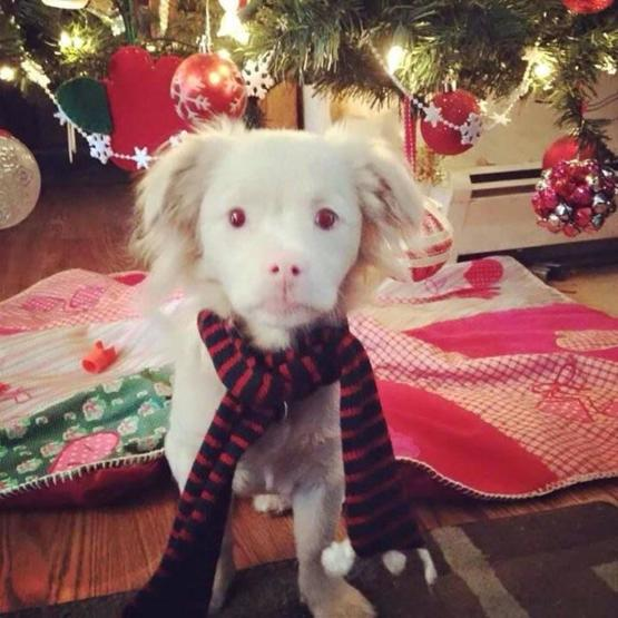 This albino puppy looks like Falcor from The Neverending Story..