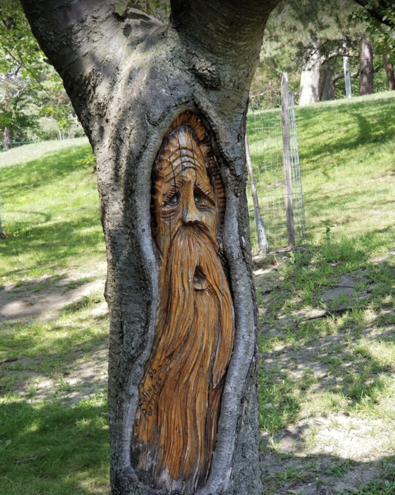 A wizard man carved into a tree in High Park, Toronto
