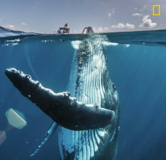 David Edgar took this photo of an adolescent humpback whale in the South Pacific, several miles off the coast of Tongatapu, Tonga, capturing it as a split-shot with half the dome port submerged, and the other above the surface
