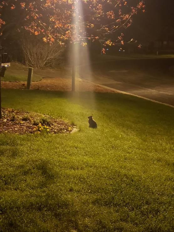 If I've learned anything from gaming, then I know this rabbit has a quest for me.