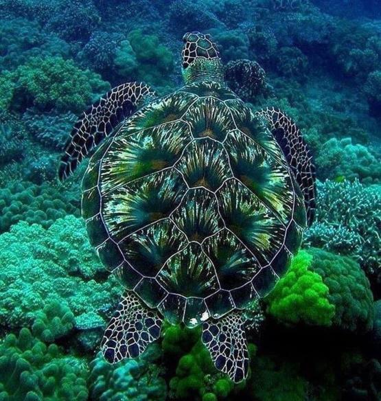 Awesome Picture of a Sea Turtle