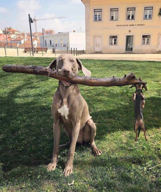 It's a dog-eat-stick world
