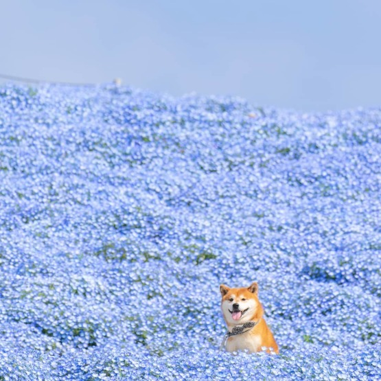 A good boy in a field of flowers