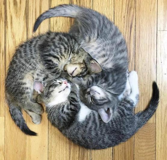 Kitty wheel
