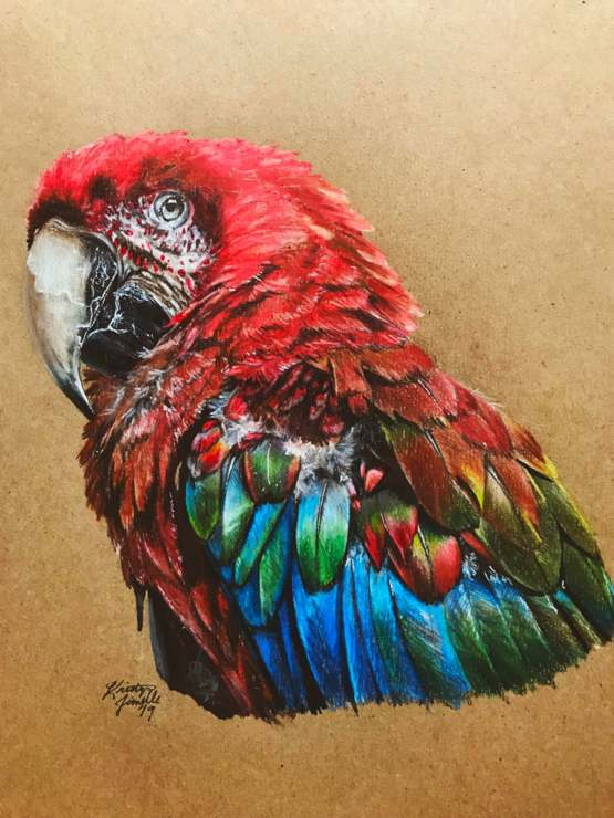 Colored pencil portrait I drew of a macaw