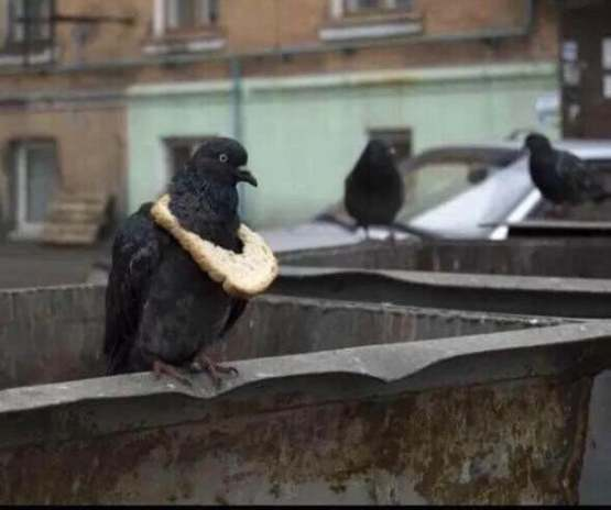 A pigeon apparently flaunting his wealth to his peers.