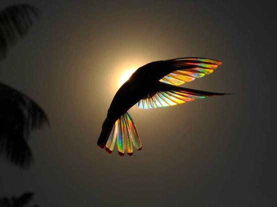 The wings of this hummingbird against the sunlight...