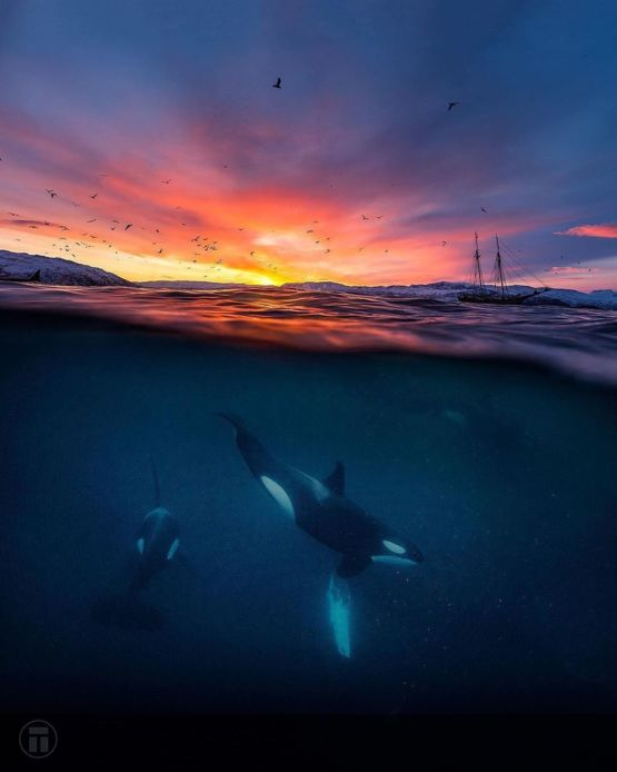 This is a beautiful landscape shot, but the three orcas take it to another level.