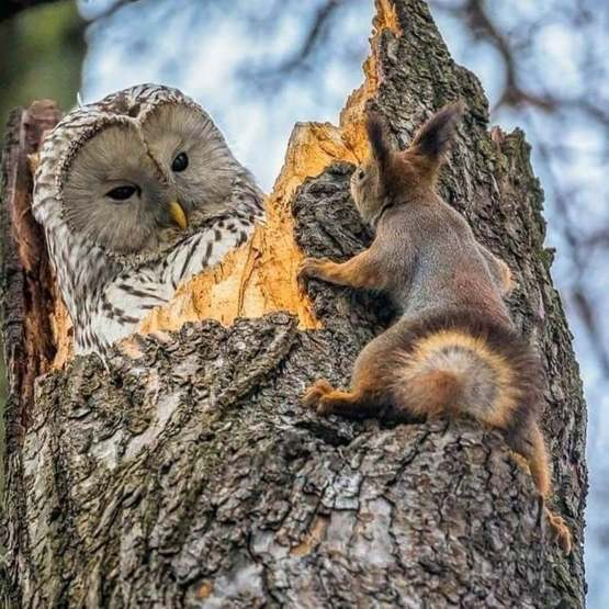 An unexpected meeting between a squirrel and an owl.