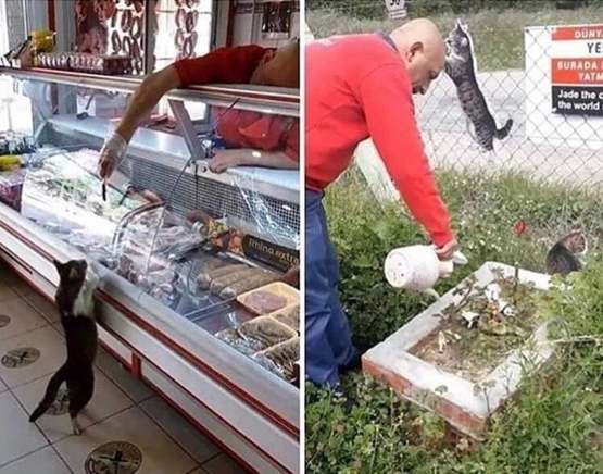 This Turkish butcher used to feed a stray cat. The cat has past away and he has gotten a grave in its honour.
