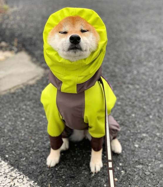 Always ready for a rainy day
