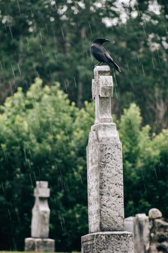 My girlfriend waited 2 years for a crow to land on a grave. Of course it was raining to make it that much better!