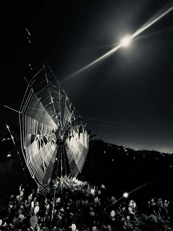 My little spider was at it again tonight, and with a full Moon for background no less
