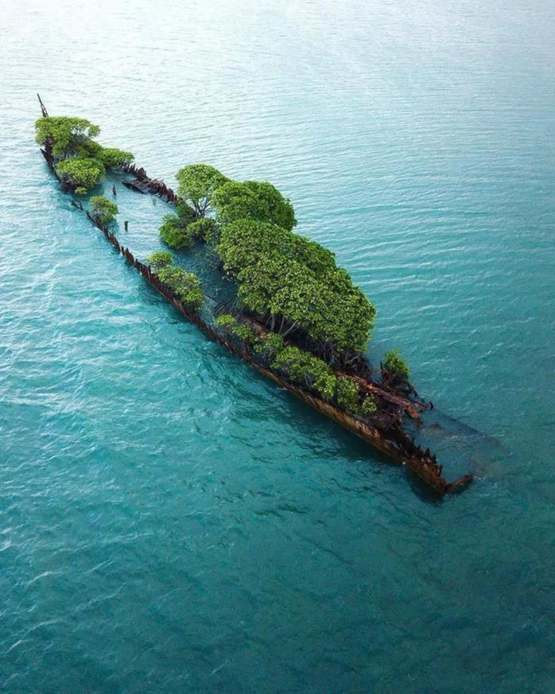 Shipwreck being reclaimed by nature