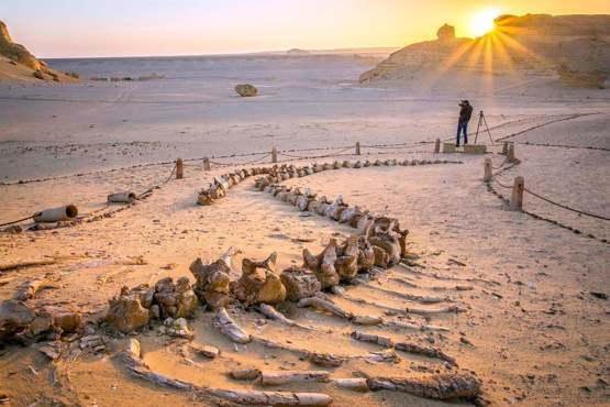 Whale fossils found in Egypt