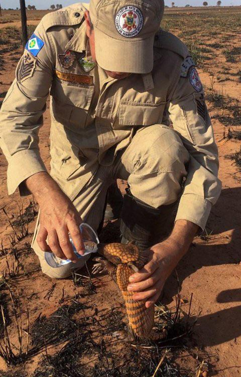 A firefighter pauses to give water to a thirsty armadillo cub whose home was destroyed in the fires wreaking havoc throughout the Amazon.