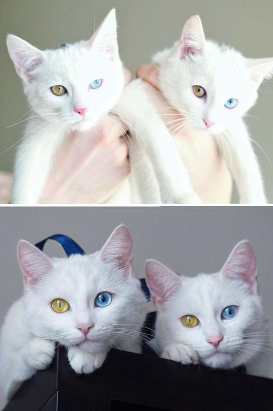 Beautiful Twin Cats