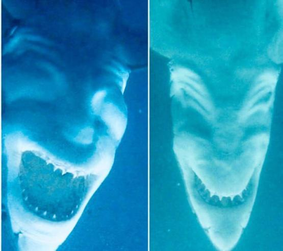 Sharks photographed upside down