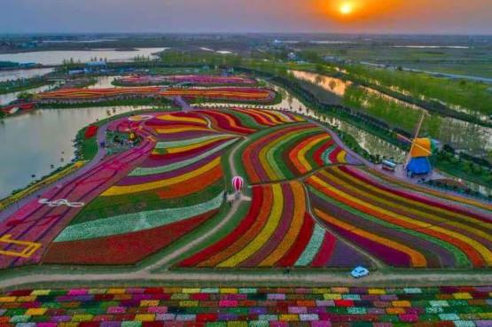 The Holland Sea of Flowers in full bloom. Over 30 million tulips.