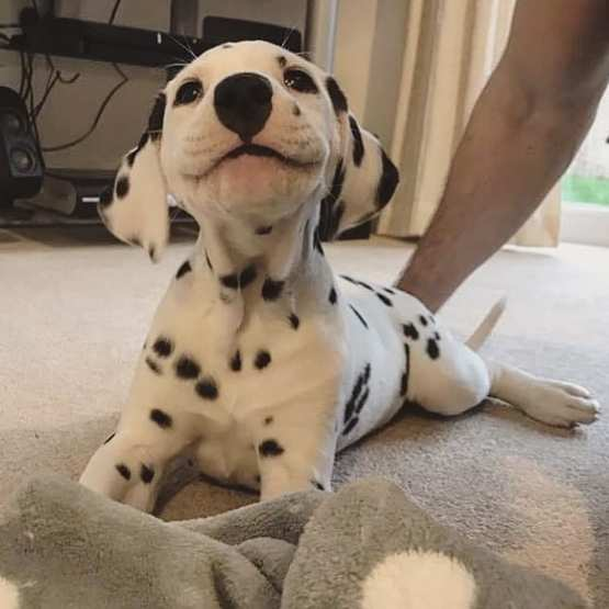 The cutest little smile you'll ever see!?????